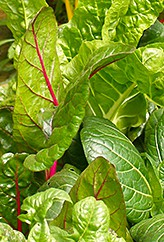 swiss chard mix